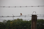 Lublin_-_Majdanek_-_017_-_Bird_on_barbed_wire