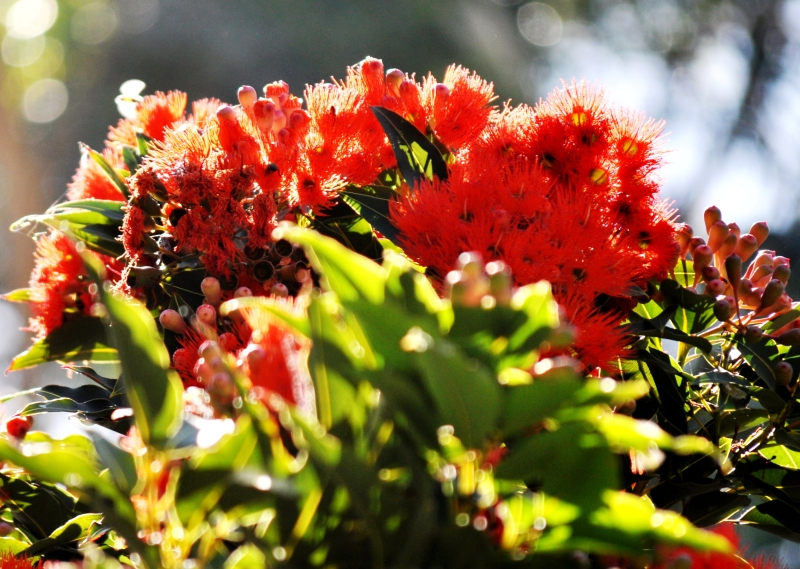 Red, Green and Sunlight