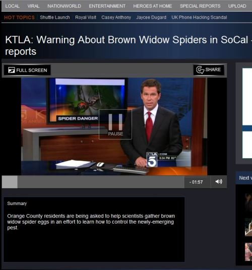Warning about Brown Widow Spiders In SoCal-Orange County
