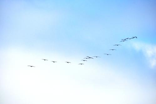 Flight Formation _ Regular drill