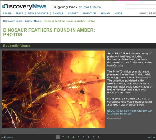 Dinosaur Feathers Found in Amber - Photos by DiscoveryNews