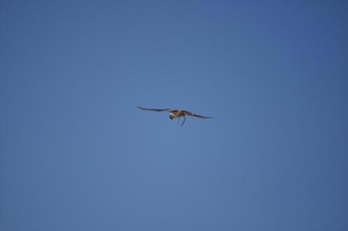 Hovering Bird