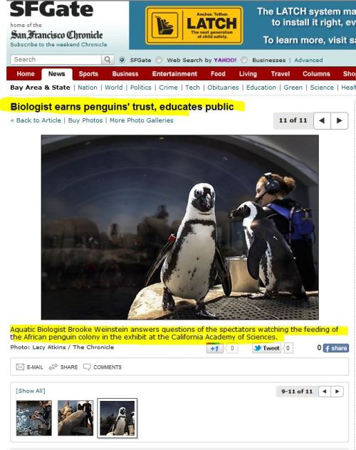 Biologist earns penguins' trust, educates public (from SFGate)