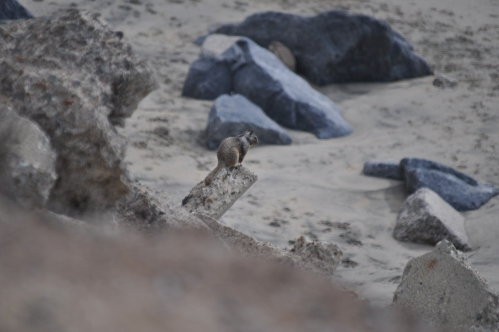 Beach Enthusiast (my nature photography)