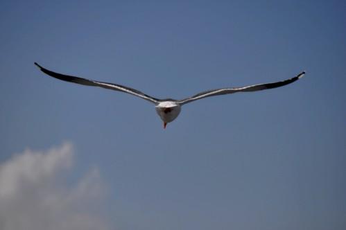 The Sea Gull: Sky Ballerina
