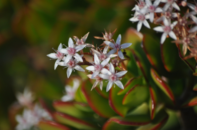Flowers of spring (my nature photography)