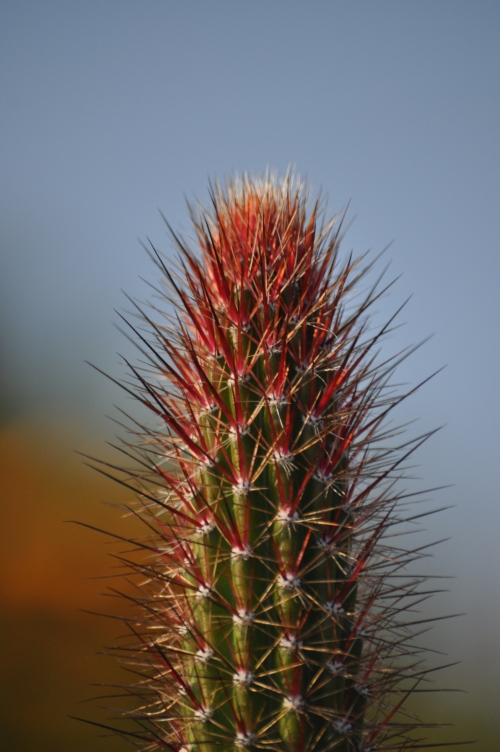 The afternoon of a Cactus (my nature photography)