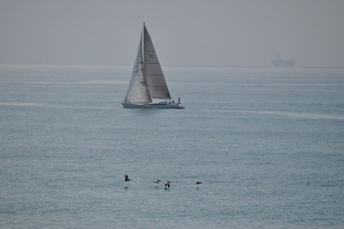 Ocean Pacific - of sailboats and birds (my life photography)