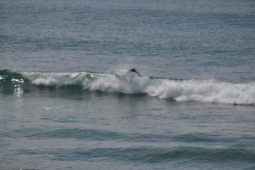 Surfing - twist and splash Huntington Beach (my life photography)
