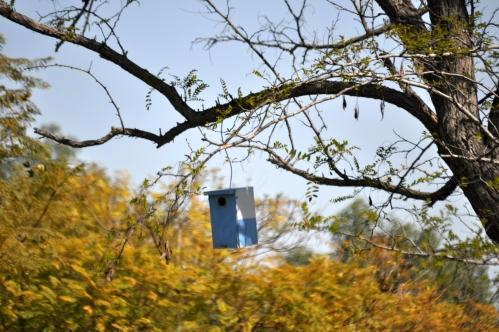The Blue Bird's Blue house (my photographic memoirs)
