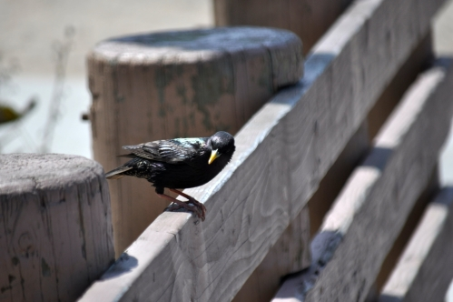 Black Bird (my photographic memoir)