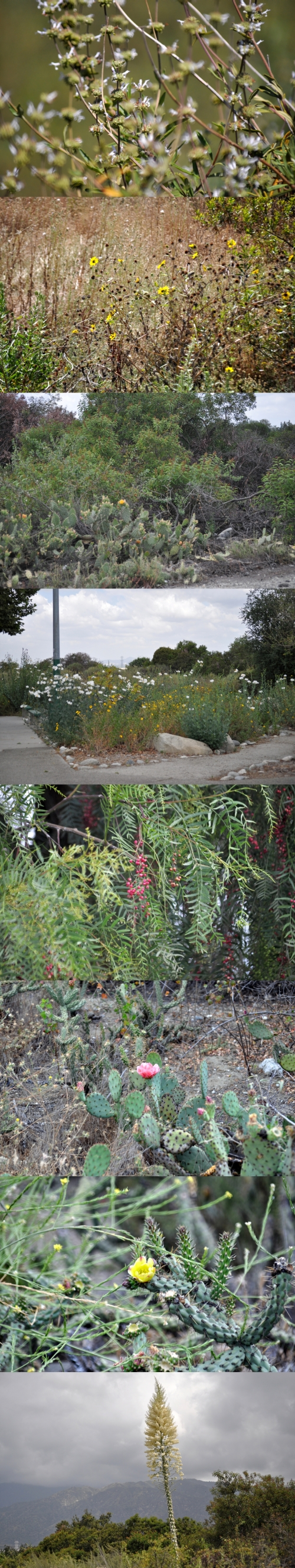 Vegetation around the San Gabriel Nature Preserve