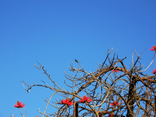 Wilderness Park - Downey: Hummingbird (my photographic memoir)