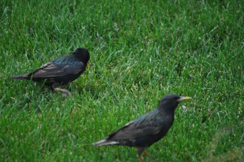Nice birds (don't know name)
