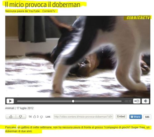 Love like only between cat and dog can exist: Check this out! (from Corrierre TV)