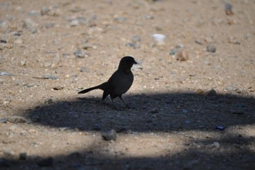"""Black Bird: """"I'm still in the shade..."""""""
