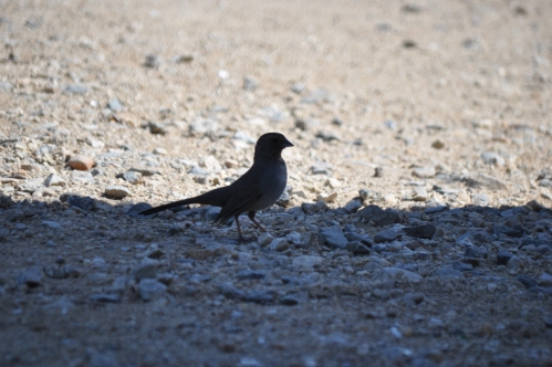 "Black Bird: ""I'm in the shade..."""