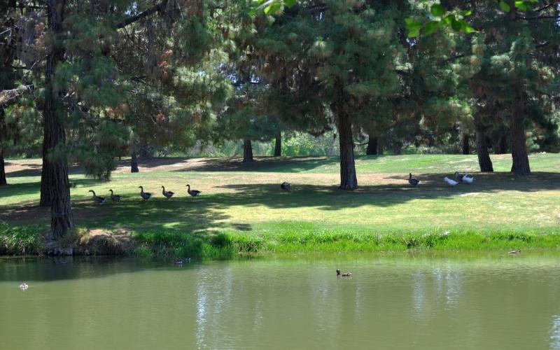 El Dorado Park _Nature lives here