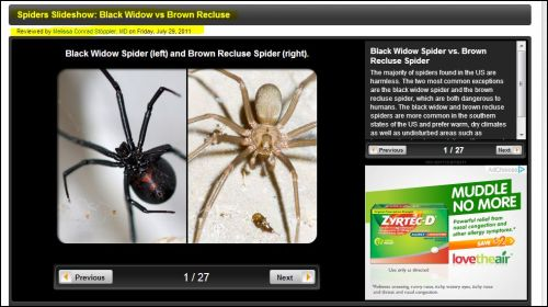 spiders slideshow: black widow vs brown recluse