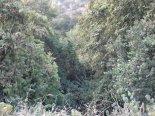 CAM01116- Do the dry creek