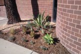 Water conservation: all these decorative plants require very little watering.