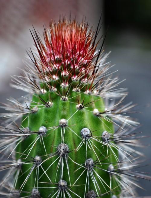 cactus Nikon D5000, NIKKOR 18-55 lense