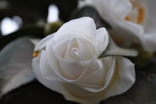 Gardenia show Nikon D5000