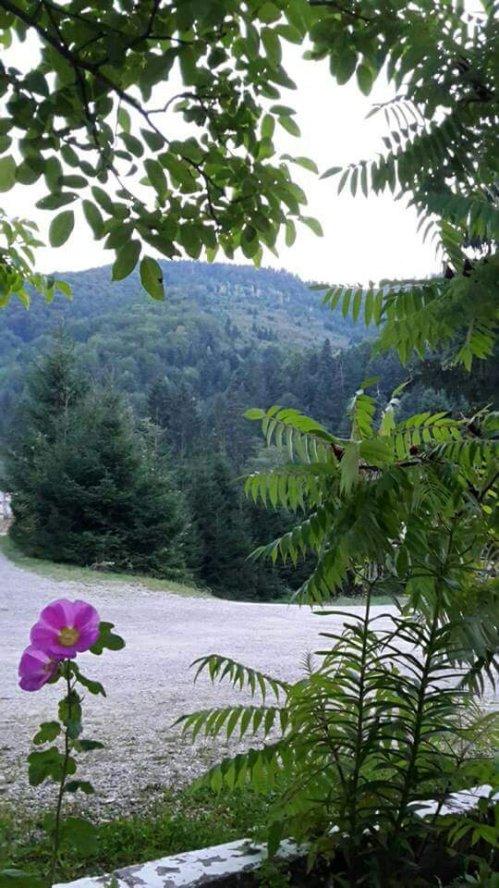 Peisaj de la Sâmbăta de Sus, de la păstrăvăria