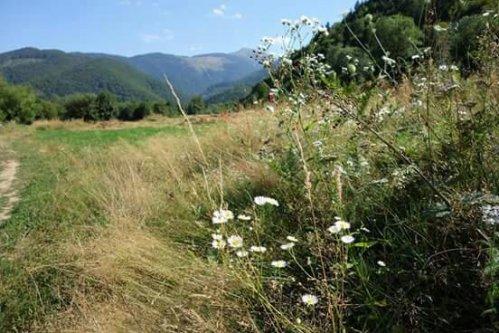 Flori de august