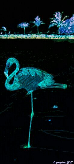 Flamingo at night