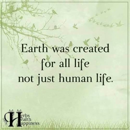Unlike as tought in the bible...Earth was created for all life, not just for human life!