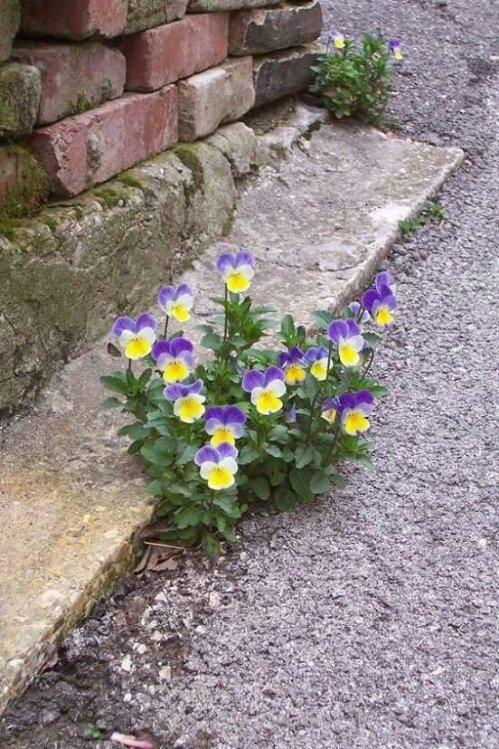 Mi piace quando un fiore o un ciuffo d'erba cresce attraverso una fessura nel calcestruzzo. È così fottutamente eroico.G. Carlin