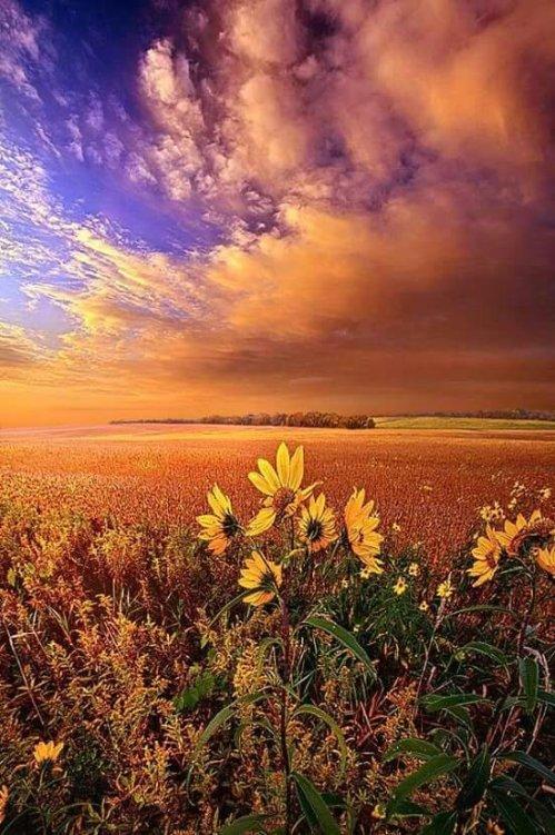 Autumn: the golden season
