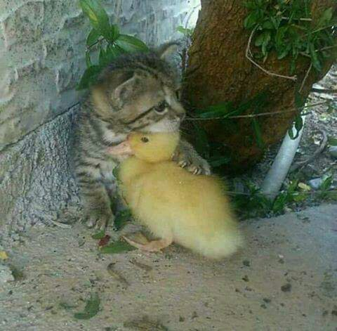 Don't worry babe...you're my duck, I'm your cat... :)
