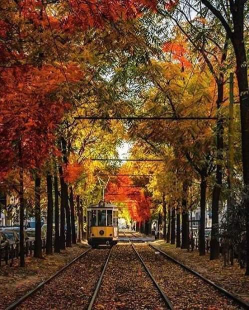 Autumn Colors in Milan !