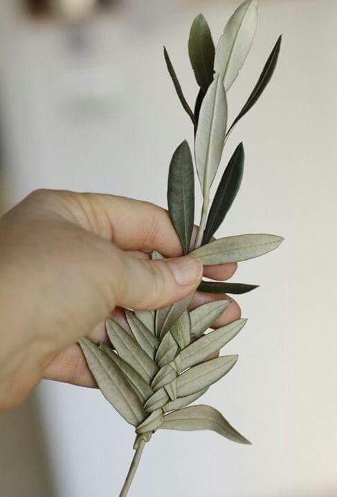 Un ramoscello d'ulivo in segno di pace.   Buona domenica delle Palme!