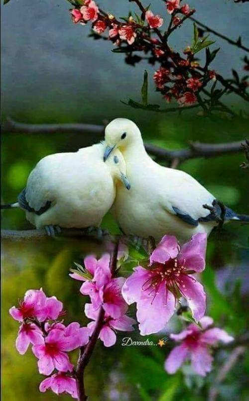 Buon Sabato Santo a voi e alle vostre famiglie. Vi auguro che sia ricco di pace, tranquillità e tanta bontà.   Auguri!