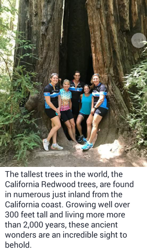 The tallest trees in the world, the California Redwood trees