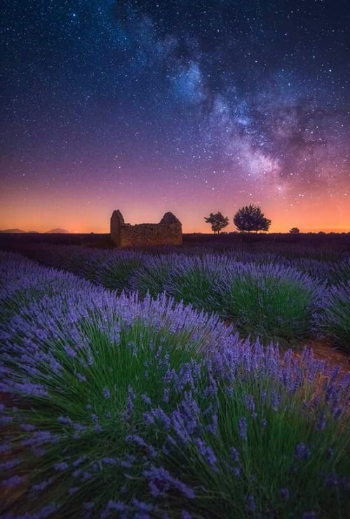 A Lavender Night (photo by Albert Dros) - Valensole, Provence, France via: https://bit.ly/2EZ7MTd