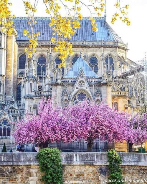 Notre Dame, Paris. Photo by @akkotiens