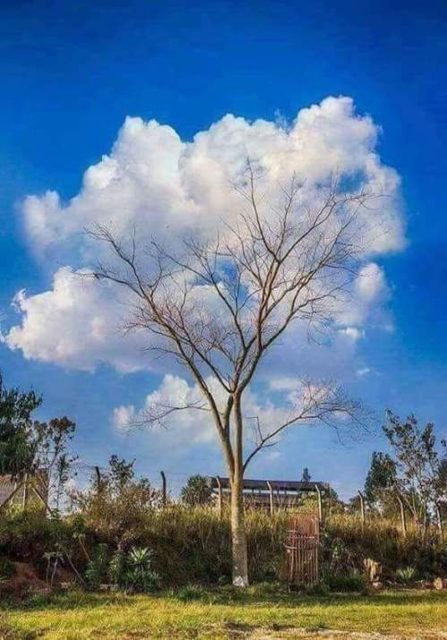A tree of clauds: from a cloud one could of dream anything
