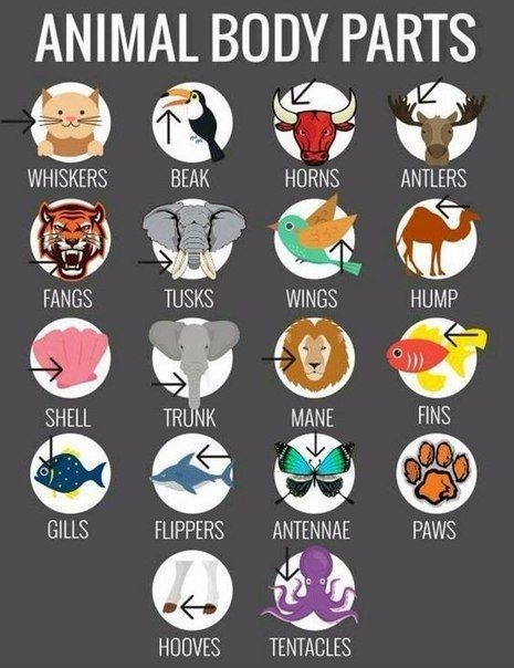 ESL: ANIMAL BODY PARTS