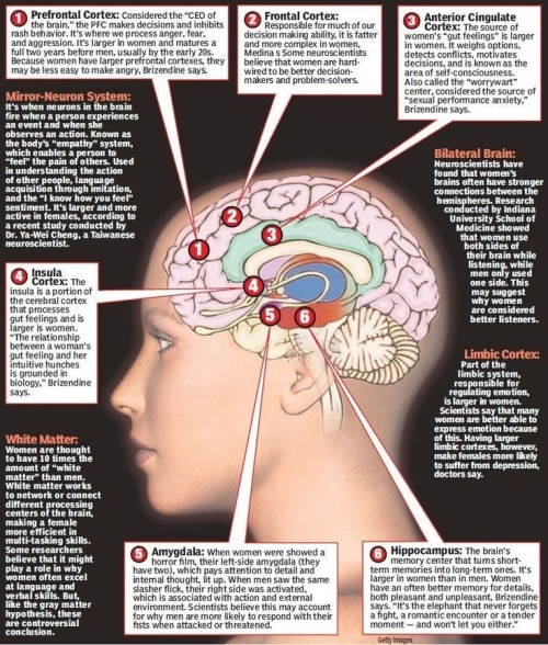 MEDICAL LIBRARY- HEALTH AND LIFESTYLE: HUMAN BRAIN