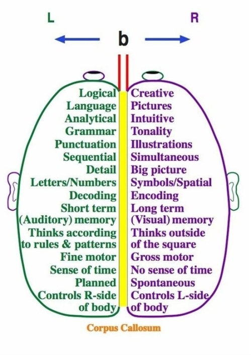 Left Brain's vs. Right's Brain Hemispheres